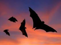 Летучие мыши летая на заход солнца Стоковые Изображения RF