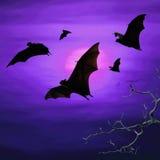 Летучие мыши летая на ночу Стоковые Фотографии RF