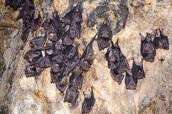 Летучие мыши спать Стоковое Изображение RF