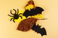 Летучие мыши 2 чернот и черный паук с листьями осени Новая эра осени halloween счастливый украшение halloween стоковые изображения rf