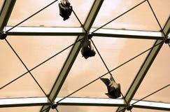 летучие мыши Стоковая Фотография