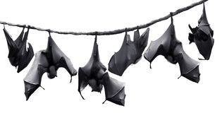 летучие мыши Стоковое Фото