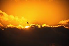 Летящая птица в небе Сценарный восход солнца с красивым cloudscape Стоковое Изображение RF