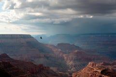 Летящая птица на гранд-каньоне Стоковое Изображение