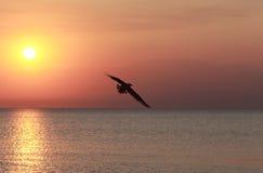Летящая птица против захода солнца Стоковые Фотографии RF