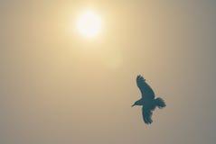Летящая птица с солнцем теплым Стоковая Фотография RF