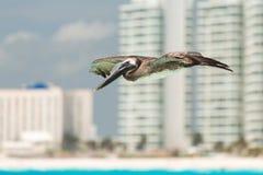Летящая птица Стоковое Изображение