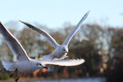 Летящие птицы в парке Стоковые Изображения RF