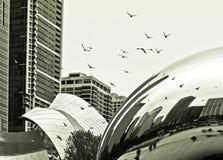 Летящие птицы в Чикаго (черно-белом) Стоковое Изображение