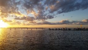 Летящие птицы захода солнца Стоковое фото RF