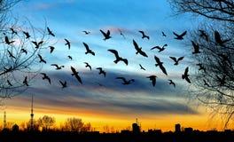 Летящие птицы и городской пейзаж на красивом заходе солнца золота Стоковые Изображения