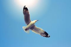 Летящие птицы на голубом небе Стоковые Фото