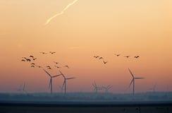Летящие птицы на зоре в зиме Стоковая Фотография RF