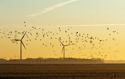 Летящие птицы на зоре в зиме Стоковая Фотография