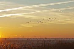Летящие птицы на зоре в зиме Стоковые Изображения RF