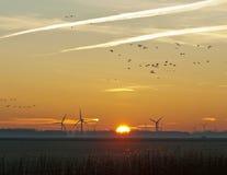 Летящие птицы на зоре в зиме Стоковое Изображение RF