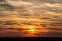 Летящие птицы на драматической предпосылке захода солнца Стоковая Фотография