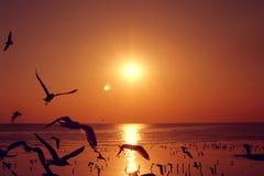 Летящие птицы силуэта Стоковые Фотографии RF