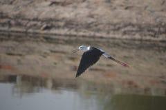Летящие птицы стоковое изображение rf