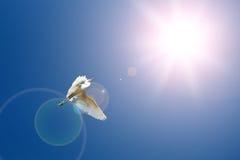 Летящие птицы Стоковые Изображения