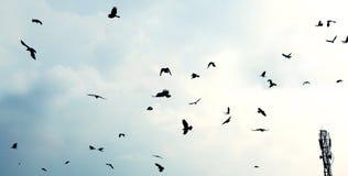 Летящие птицы стоковое фото