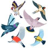 6 летящих птиц Стоковые Изображения