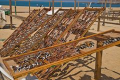 Лечить рыб в Nazare, Португалия Стоковые Фото