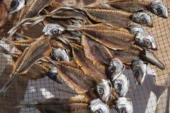 Лечить рыб в Nazare, Португалия Стоковые Изображения RF