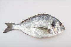 Лещ моря сырых рыб Стоковая Фотография