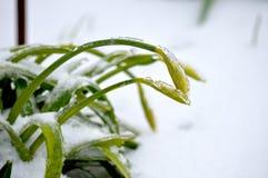 Лед весны Стоковые Изображения