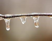 Лед лимба березы Стоковые Изображения RF