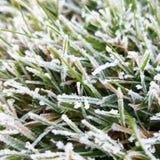Ледистая трава Стоковые Фотографии RF