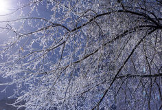 Ледистые ветви дерева на ноче в зиме Стоковое фото RF