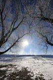 Ледистые ветви дерева против голубого неба Стоковые Изображения RF