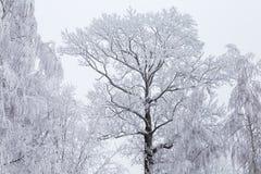 Ледистые деревья зимы с небом стоковое фото