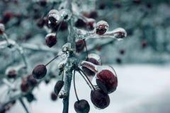 Ледистые ягоды Стоковое Изображение RF
