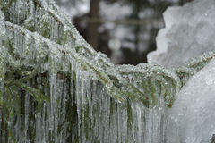 Лед на ветви 3 Стоковые Фотографии RF