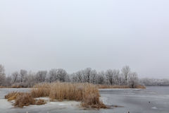 Лед на озере холодная зима помеец травы Стоковые Изображения RF