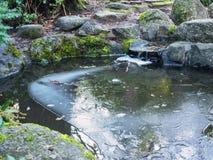 Лед на пруде с малым водопадом стоковые фотографии rf