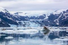 Ледник Джона Hopkins на туманный день в национальном парке залива ледника. Стоковые Изображения RF