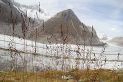 Ледник Aletsch осени, Швейцария Стоковое Изображение RF