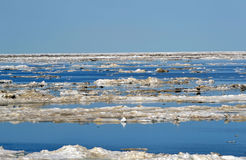 Ледовитая подача льда Стоковое Изображение