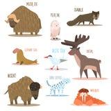 Ледовитые и антартические животные, птицы вектор Стоковое фото RF