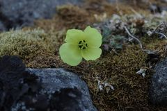 Ледовитый цветок Стоковые Изображения