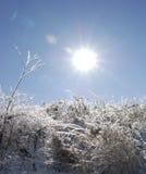 Лед покрыл цветок Стоковые Фото