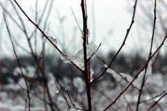 Лед Стоковая Фотография