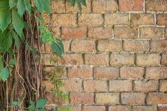 Лиана на стене водонапорной башни, предпосылка Стоковое Фото