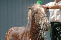 ливень лошади Стоковая Фотография