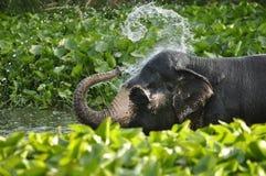 Ливень слонов Стоковые Изображения RF