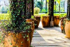 Лига плюща в саде стоковые изображения